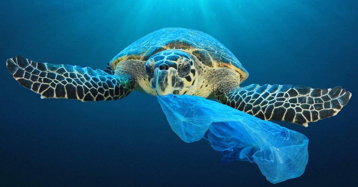 Ya dejamos de usar popotes y ahora, ¿podemos sacar el plástico de los océanos?