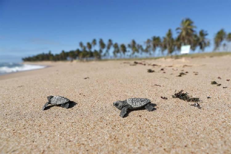 tortugas playa