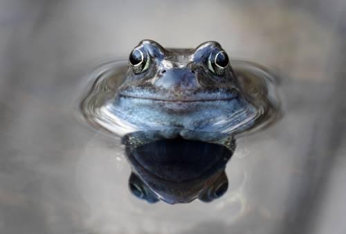 El síndrome de la rana hervida y lo que debemos aprender de él