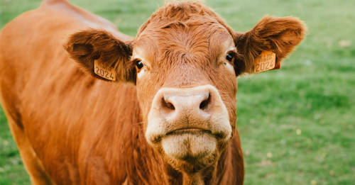 5 cosas que aprendes cuando dejas de comer productos de origen animal