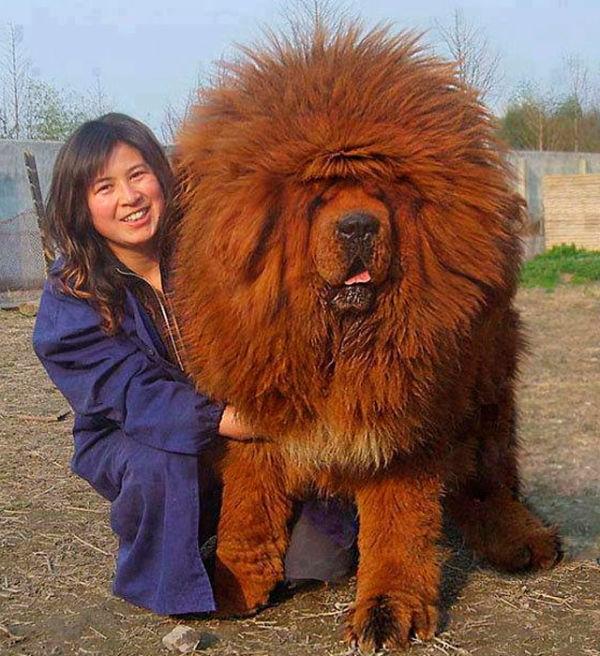 foto-perro-grande