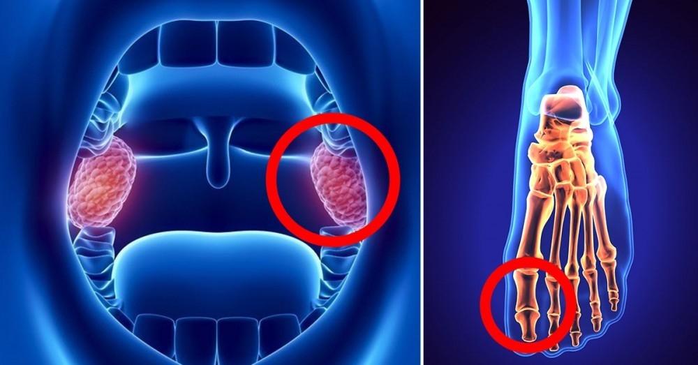 6 partes del cuerpo que son más útiles e importantes de lo que creías
