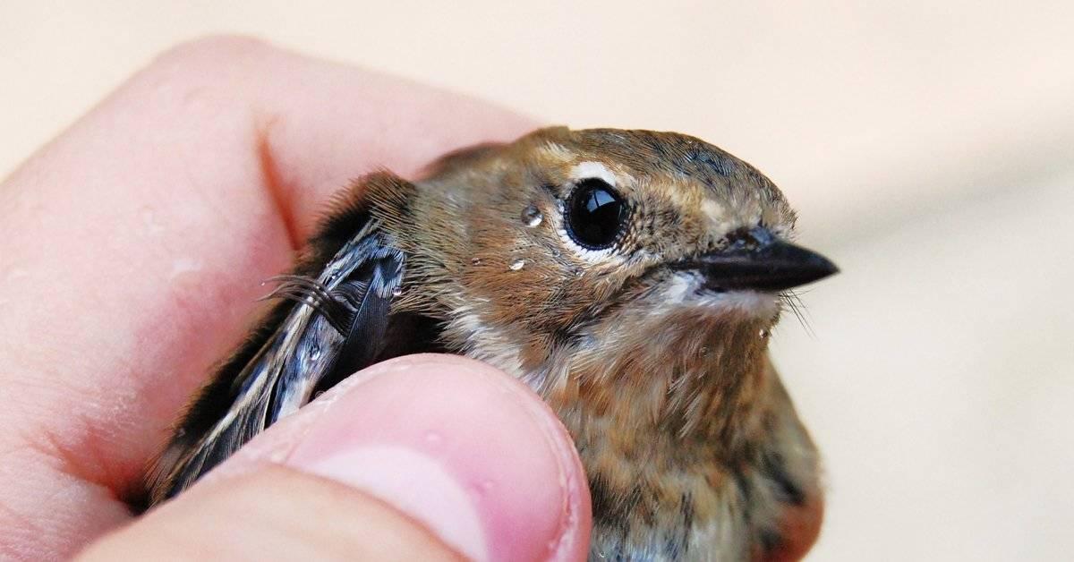 Este hombre salvó un pájaro con la técnica RCP... ¡Te impresionará verlo!