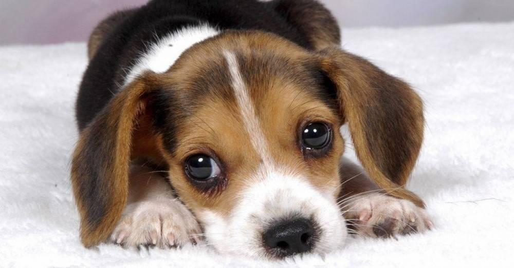 6 acciones de los perros que significan algo muy diferente a lo que crees