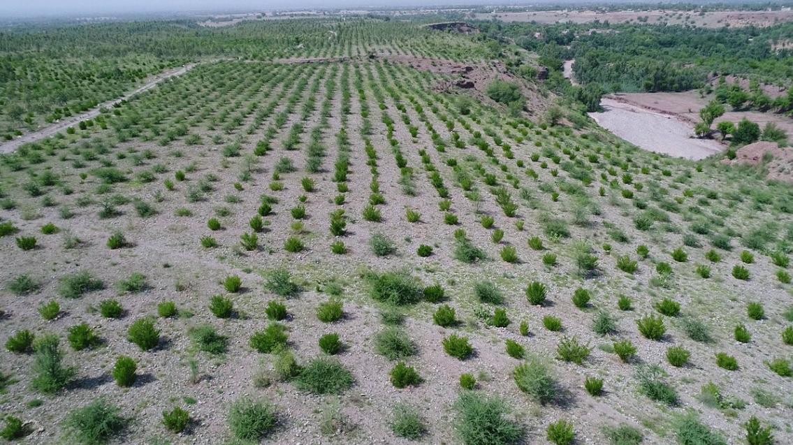 Plantarán 10 mil millones de árboles para restaurar los bosques de Paquistán