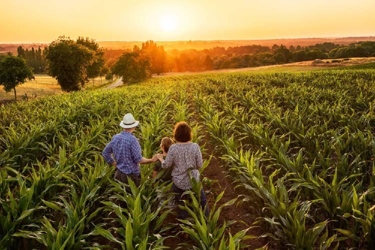 familia cultivos atardecer