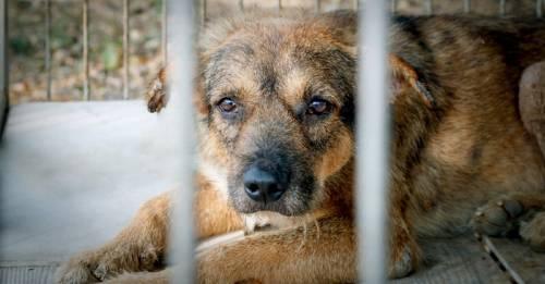 Proponen cambiar frases que naturalizan la crueldad animal. ¿Qué opinas tú?