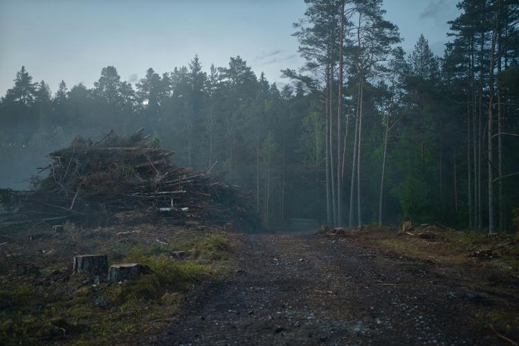deforestacion