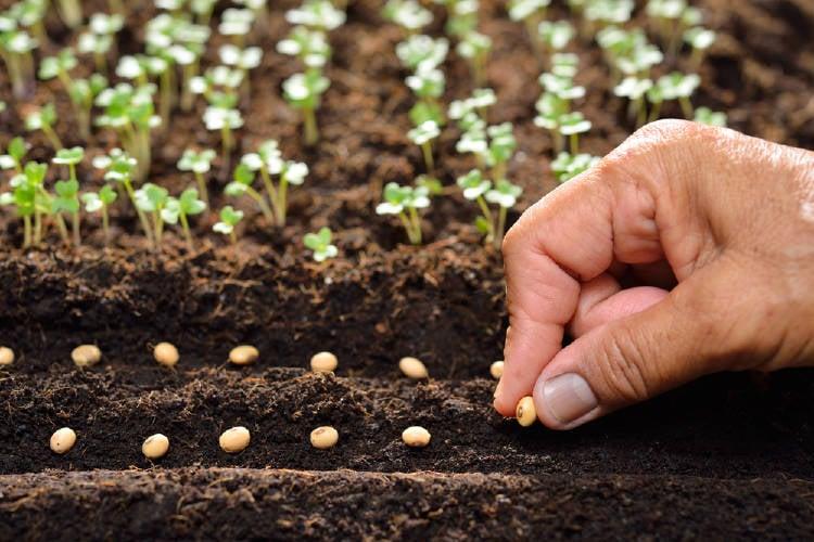 Plantar semillas en la tierra