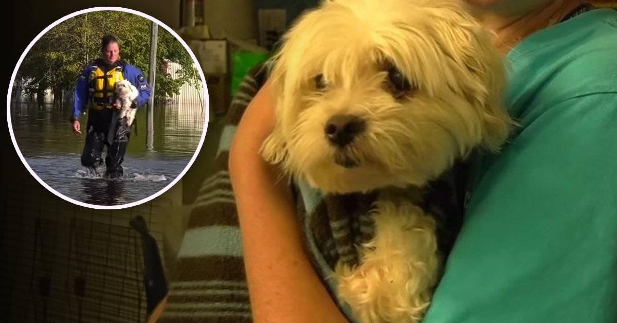 El perro que sobrevivió una semana flotando en un sofá después de Florence