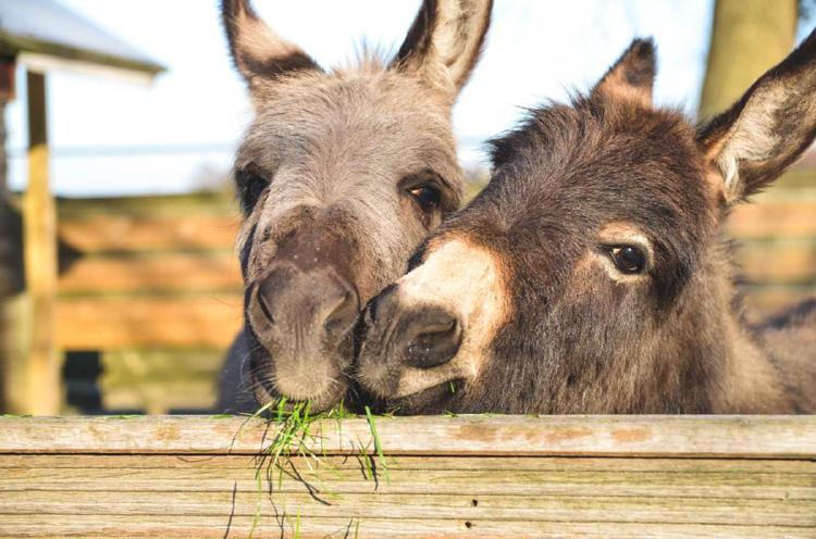 burros 2