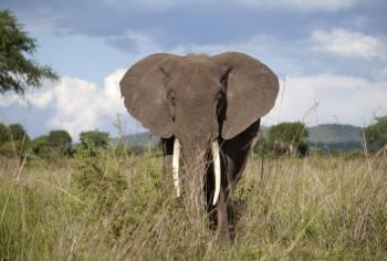 comercio de vida silvestre en áfrica