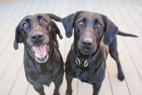 ¿Qué significa cuando un perro te ladra a ti y no a otras personas?