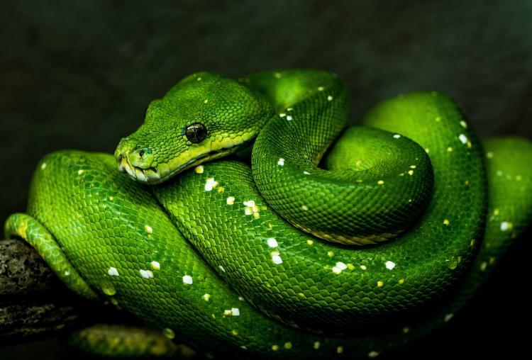 que-significa-soñar-con-viboras-verdes--unsplash.jpg