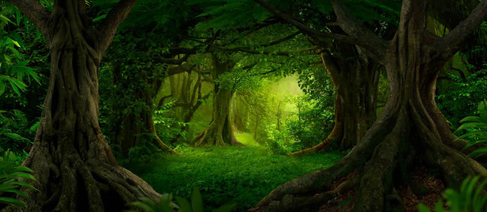 5 bosques de fantasía en los que te encantará perderte