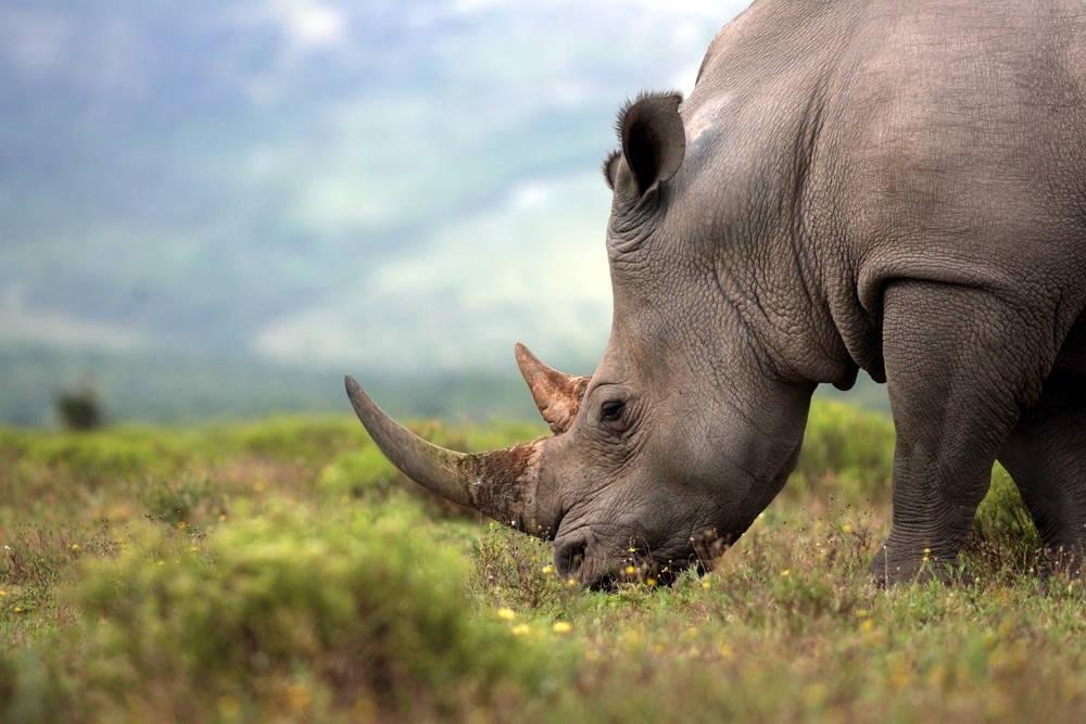 Mientras más pixelada la foto, más amenazado de extinción está el animal