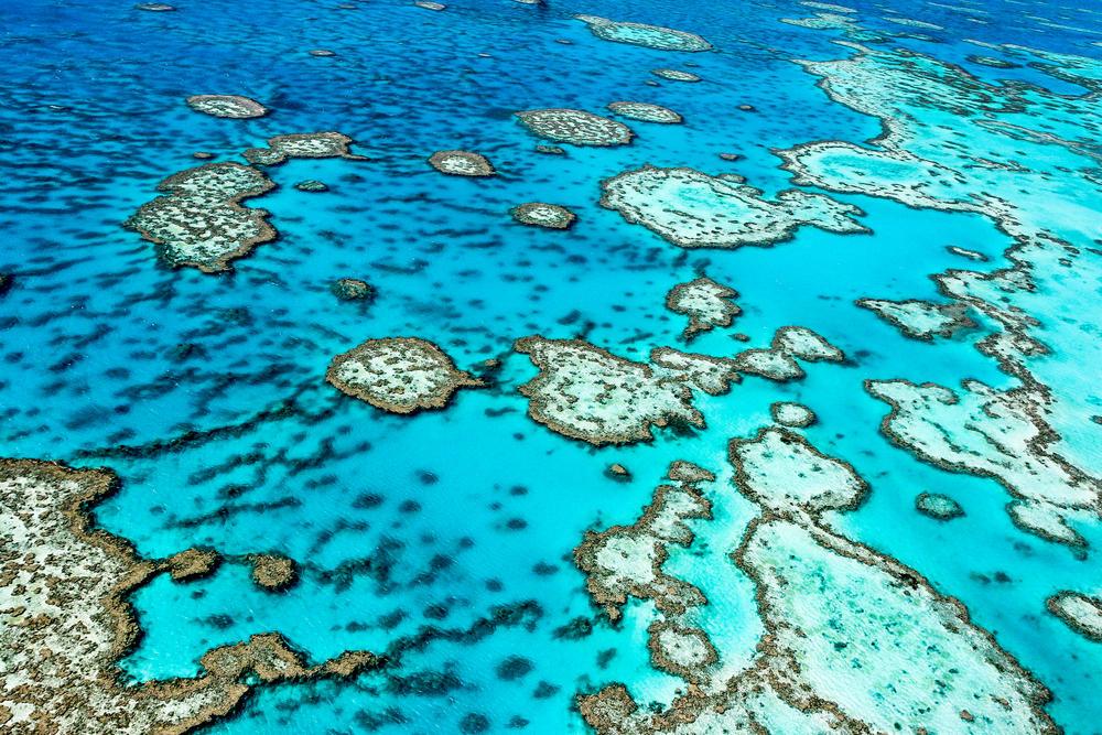 """La Gran Barrera de Coral, ahora en estado """"crítico"""" por la crisis climática"""