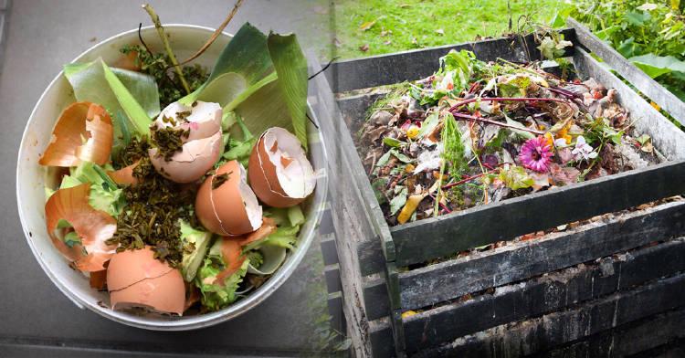 Compostera casera: conoce qué es y los pasos para hacerla
