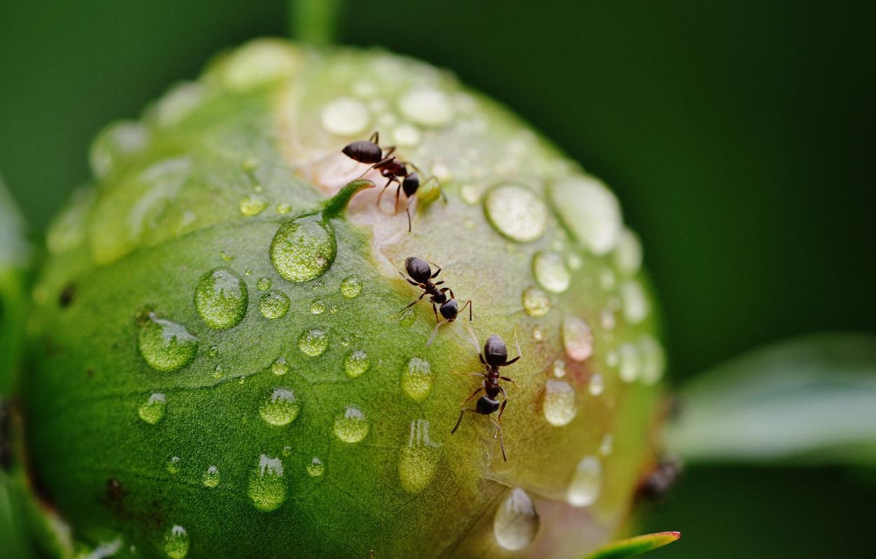 6 remedios caseros para eliminar a las hormigas de tus plantas