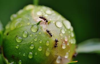 eliminar hormigas de las plantas