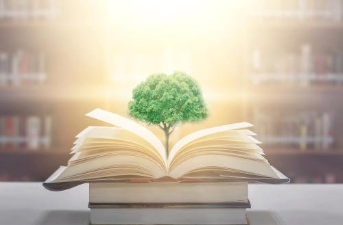 La creatividad, una habilidad fundamental de cualquier propuesta de educación ambiental