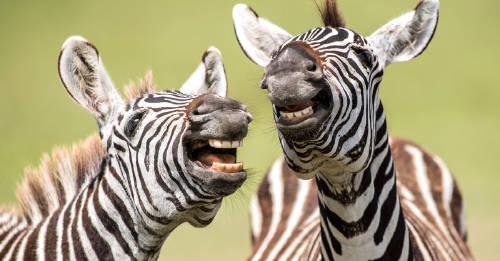 Un concurso premia las imágenes más divertidas del reino animal