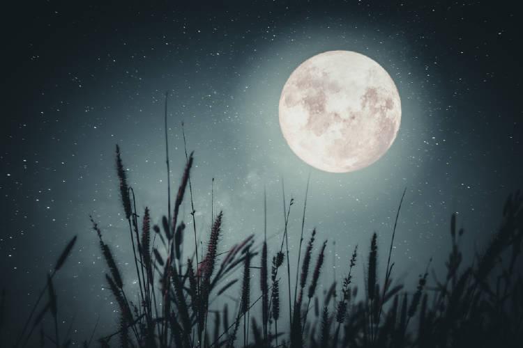 trigo luna llena