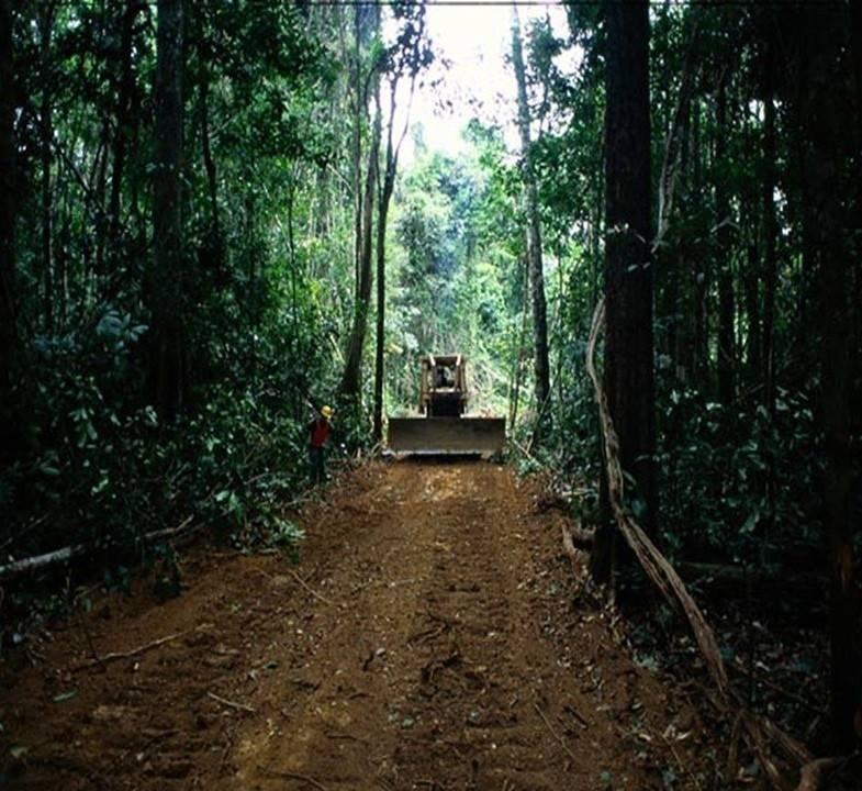 Polémica en Colombia por la ampliación de una carretera en el Amazonas
