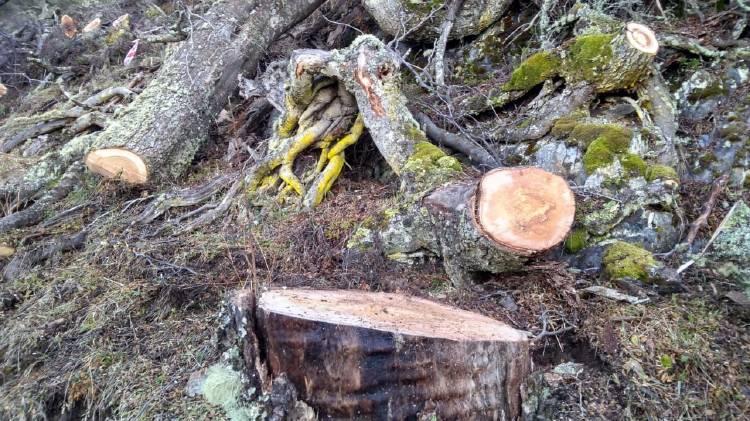 Deforestación en Tierra del Fuego
