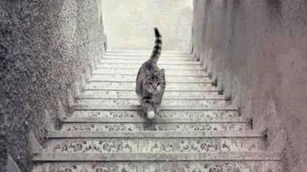 Test psicológico: ¿Qué está haciendo este gato? Tu respuesta te dirá cóm..