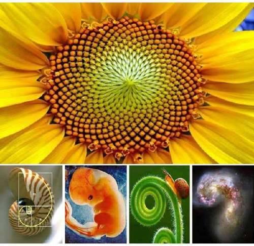 Naturaleza Fractal. Geometría Sagrada y Números.
