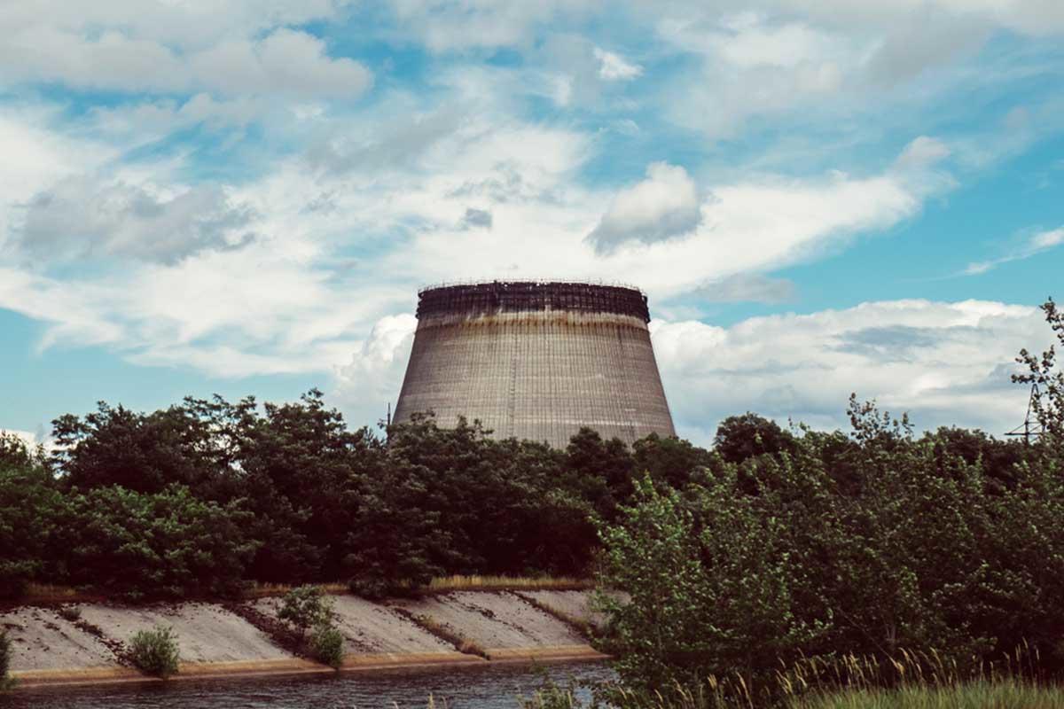 Las vacas abandonadas junto a la nuclear de Chernobyl se volvieron salvajes
