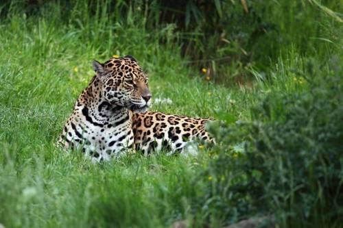 Costa Rica es el primer país del mundo en cerrar sus zoológicos y prohibir l..