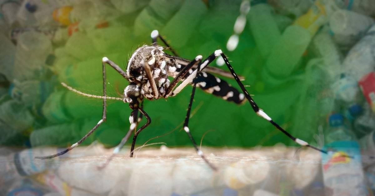 Los mosquitos comen plásticos y pueden extender la contaminación a escala global