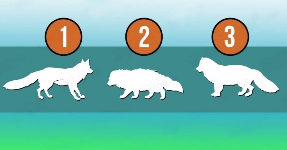 Test: ¿Cuál es el animal más fuerte? Tu respuesta revelará lo que menos co..