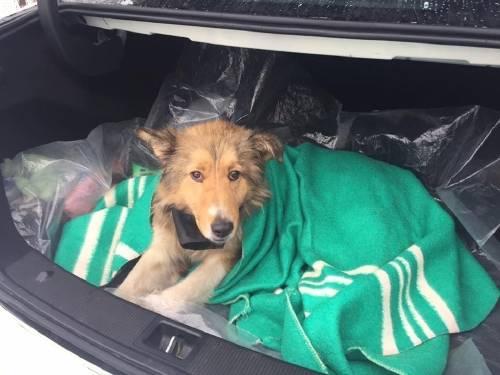 Un perro se metió bajo un tren en marcha para salvar a su compañera herida