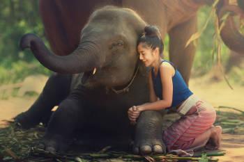 el amor animal se ve en una mujer que abraza a un elefante