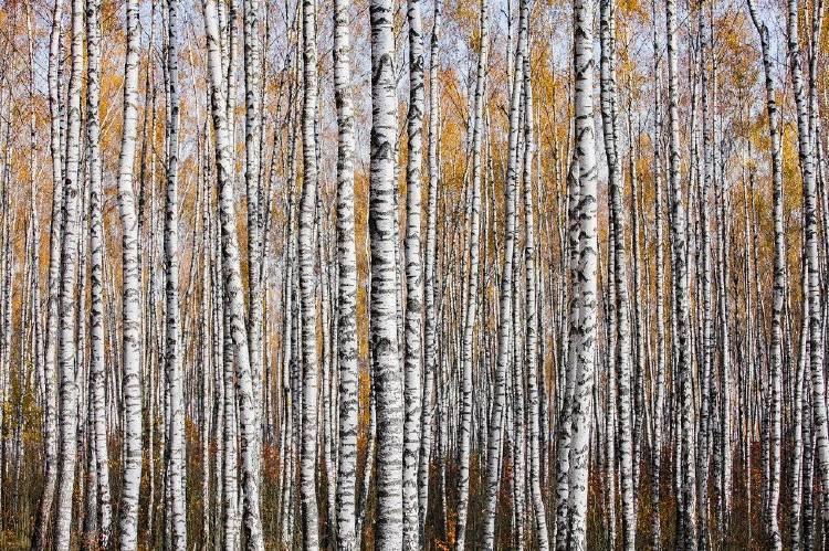 Autumn texture Mikhail Kapychka