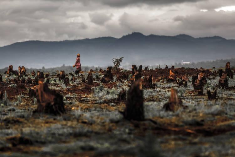 deforestacion madagascar