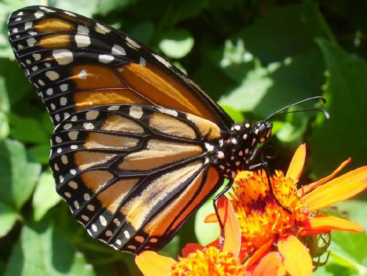 Jardín de mariposas en la Ciudad de Buenos Aires