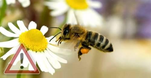 Las 7 mayores amenazas a las abejas: así podemos ayudarlas
