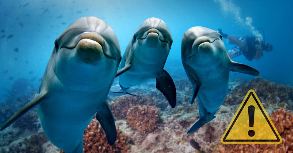 Los delfines están en peligro por el cambio climático