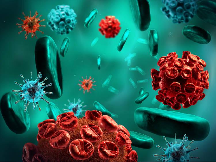 virus bacterias