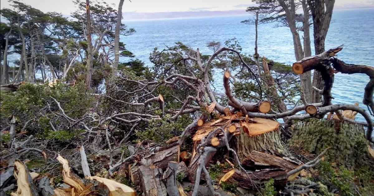 Avanza la deforestación de bosques nativos en Tierra del Fuego