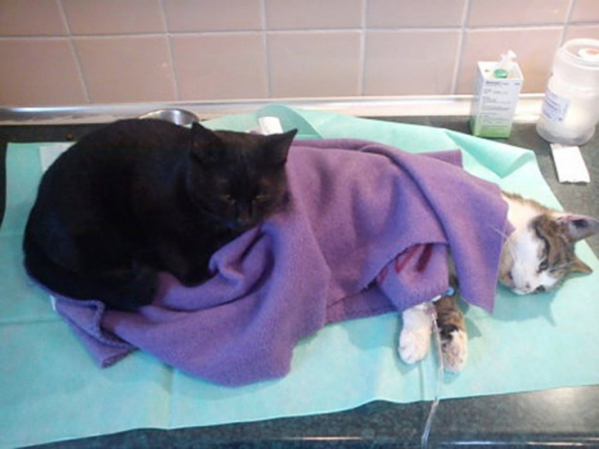 Radamenes gato enfermero - historia inspiracional