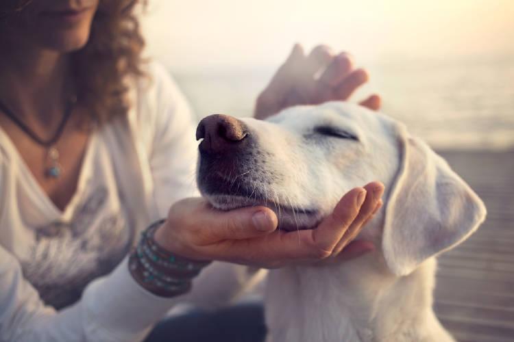 Mujer acariciando la cara de un perro