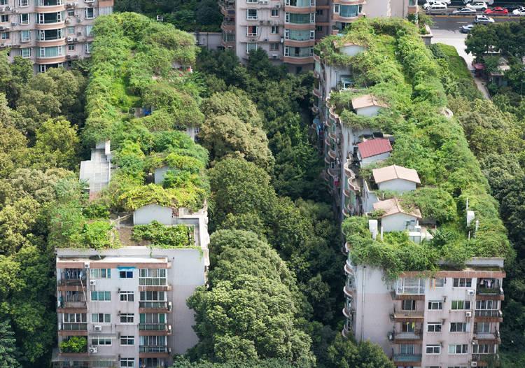 ciudad con techos verdes