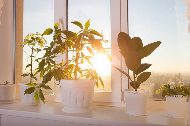 plantas ventana