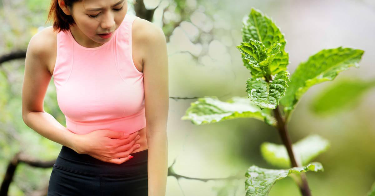 Problemas de salud que puedes sanar con plantas