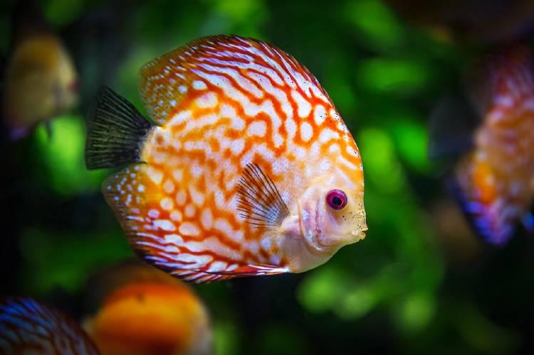 Los peces desaparecerán antes que las criaturas terrestres